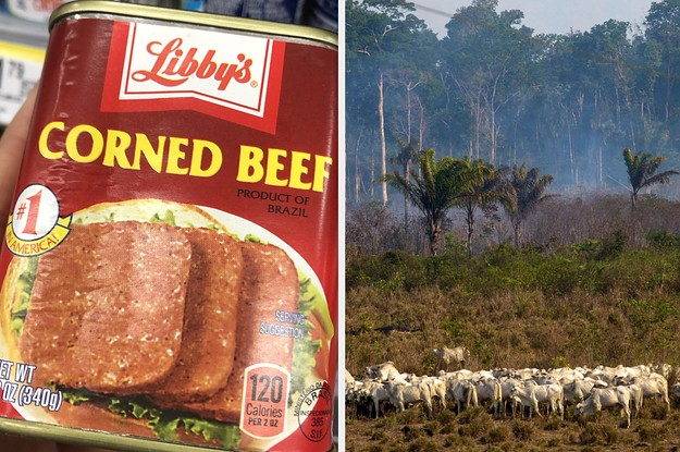 Corned Beef And Handbags: How US Consumers Are Unwittingly Contributing To Deforestation In The Amazon