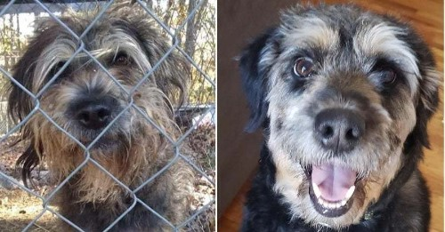 27 Dogs Before And After Getting Adopted That Just Might Make You Happy Sob