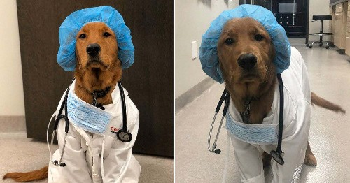 18 Dog Posts From This Month To Help Get You Through This Quarantine