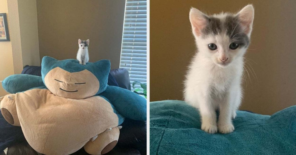 17 Cat Posts From This Week That Have A 99% Chance Of Making You Smile