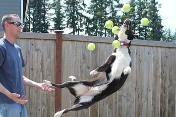 3 Dogs + 60 Tennis Balls