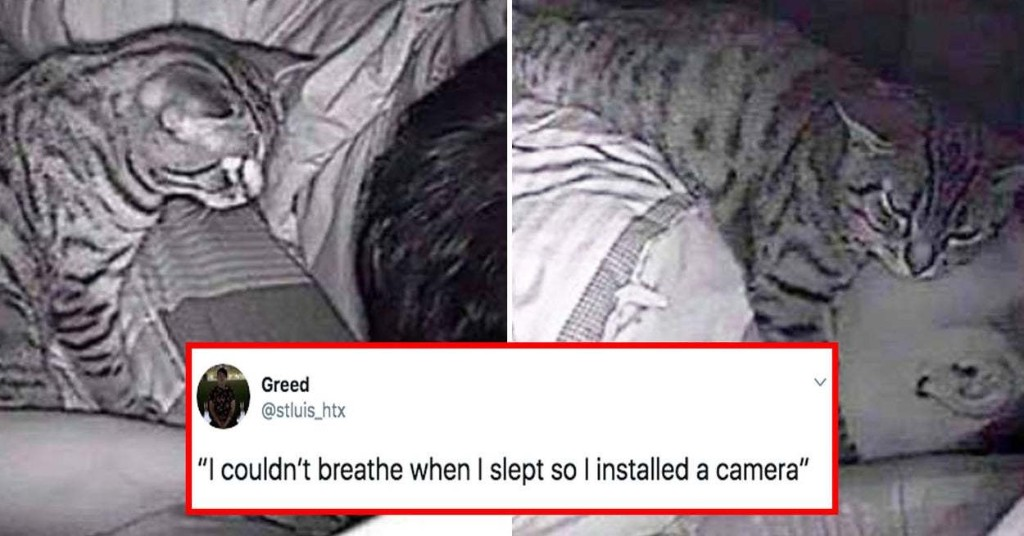 14 Times Pets Were Caught Being Bizarre On Security Camera
