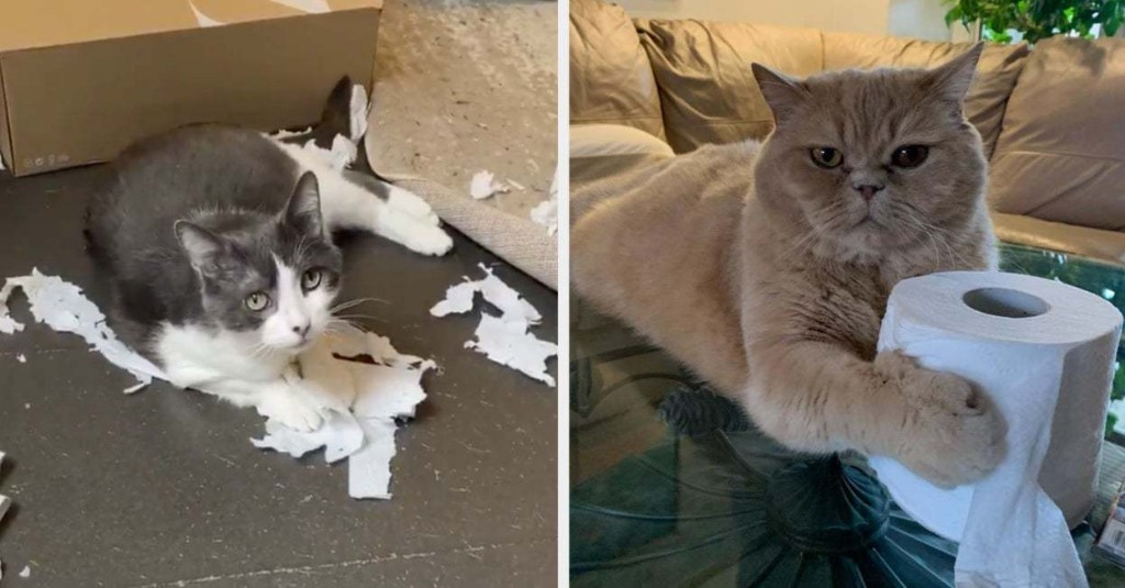 17 Cats Who Don't Care That Toilet Paper Is A Hot Commodity