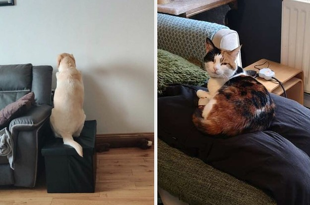 17 Pets Who Just Aren't Used To Their Owners Working From Home