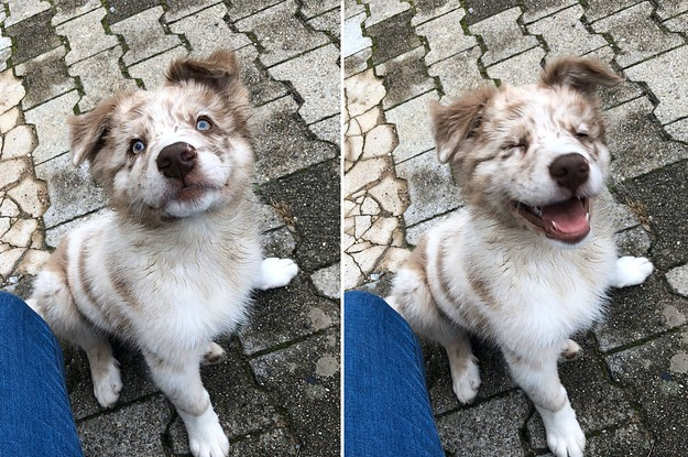 16 Dog Posts That Are So Goob, They'll Make Your Week Goob Too