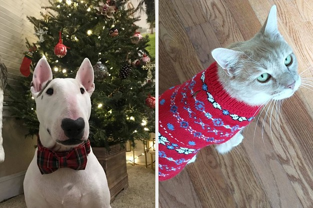 31 Things From Amazon To Help You And Your Pet Get In The Holiday Spirit