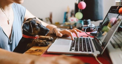 Show Us What It's Like Working From Home With Your Pets