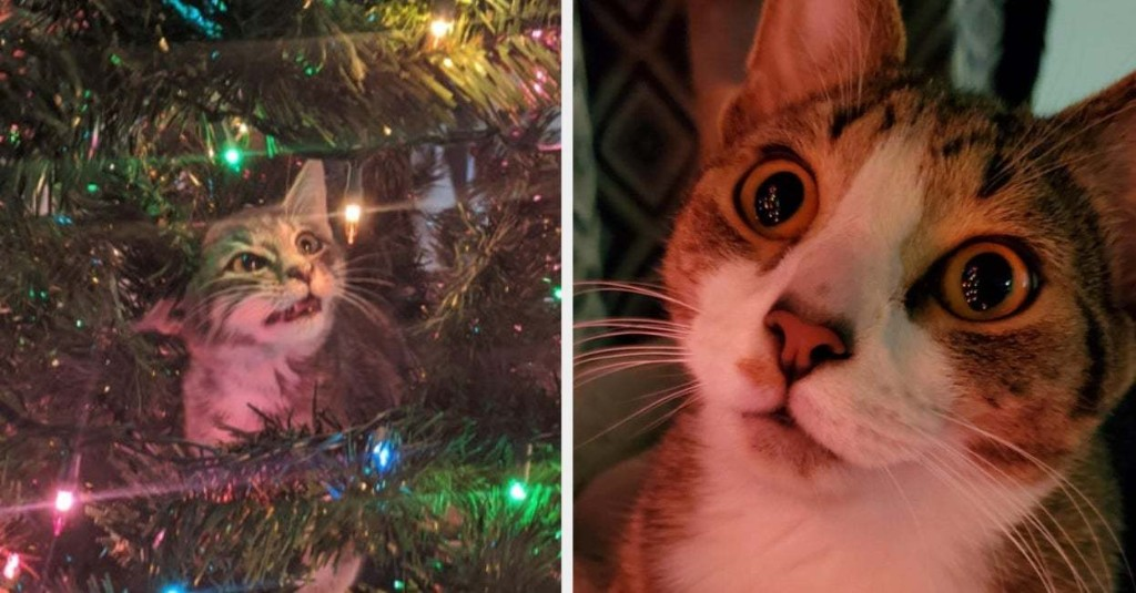17 Cats That Love Christmas Trees More Than Life Itself