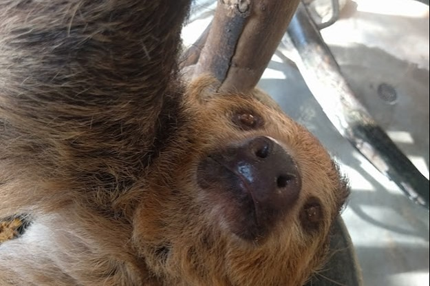 Animals Are Taking Selfies At The L.A. Zoo Starting Today