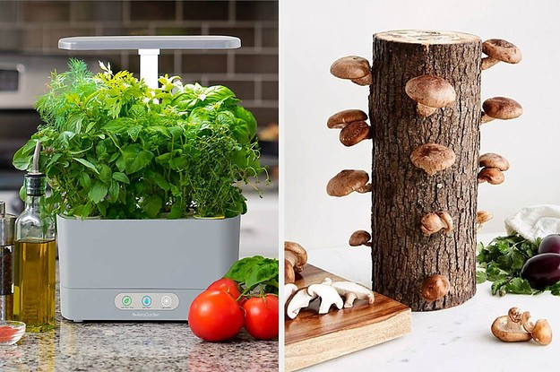 28 Gardening Kits That'll Probably Blossom Into Your New Favorite Activity