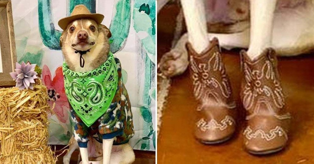 14 Dog Posts From This Week That, Frankly, We All Kinda Need Right Now