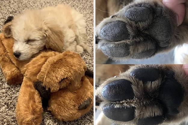 23 Gifts For Your Tiny Dog