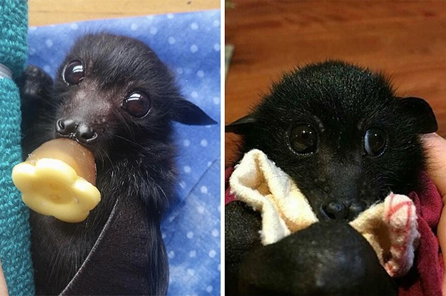 Can You Get Through This Post Without Admitting Bats Are Actually Kinda Cute?