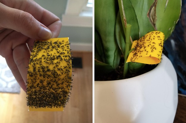 23 Plant And Gardening Products From Amazon That People Actually Swear By