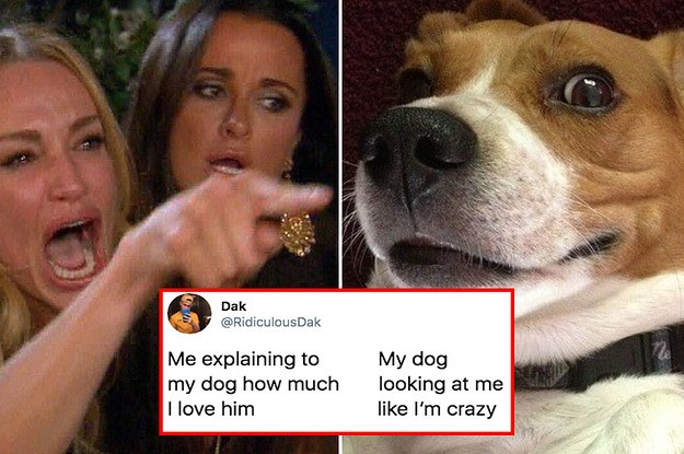 26 Of The Best Dog Posts From This Month — That's It, That's The Post