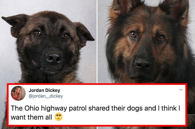 14 Dog Posts From This Week That We Really Need Right Now