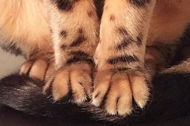 17 Little Kitty Toesies To Get You Through Today