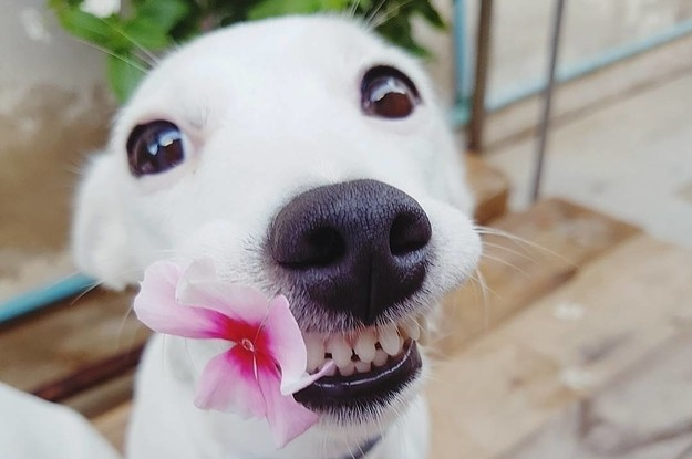 This Dog's Infectious Smile Is Breaking Everyone's Heart