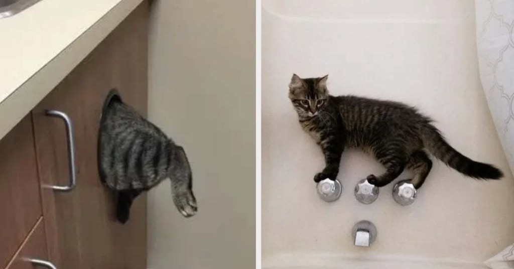 19 Cats Who Are So, So Cute, But So, So Dumb