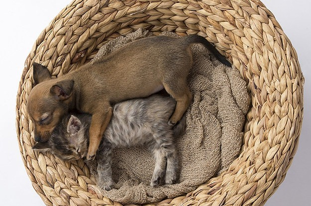 Abandoned Kitten And Puppy Become Best Friends Despite All Odds