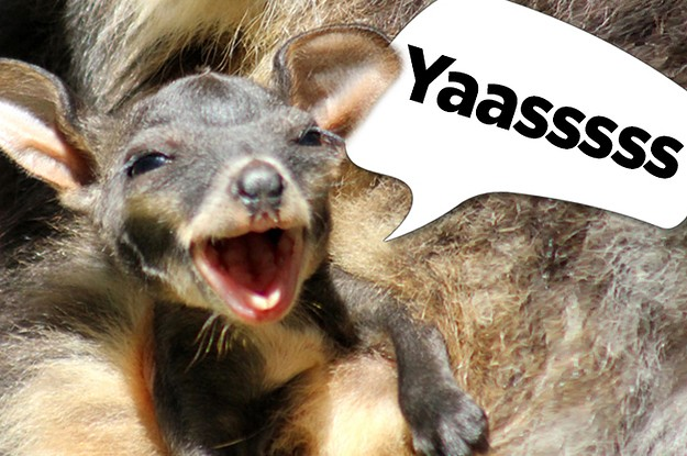 This Joey Just Popped Out Of Her Mother's Pouch And Is So Excited To Be Here