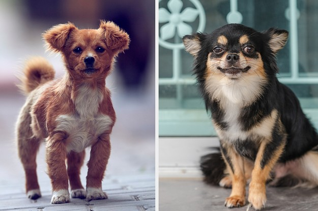 Pick Some Puppies And We'll Tell You Whether You're An Introvert Or An Extrovert