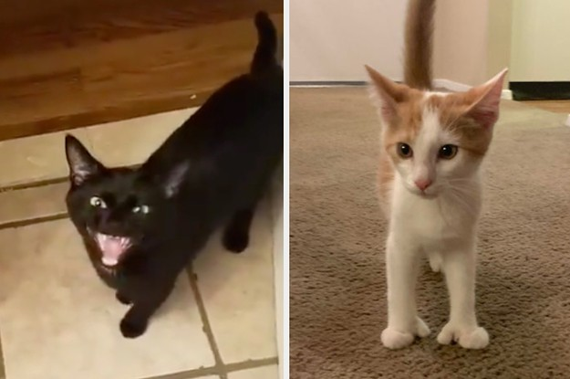 """14 Cat Posts From This Week That'll Make You Say, """"We Don't Deserve Cats"""""""