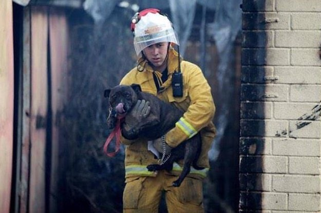 Wildfire Kills Dozens Of Pet Dogs And Cats