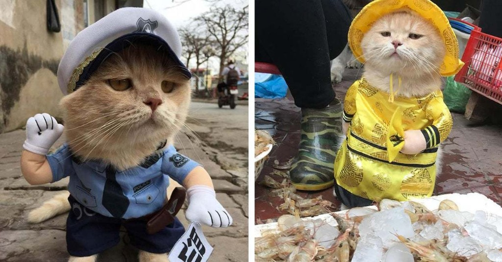 This Cat Named Dog Works At The Fish Market And People Love Him