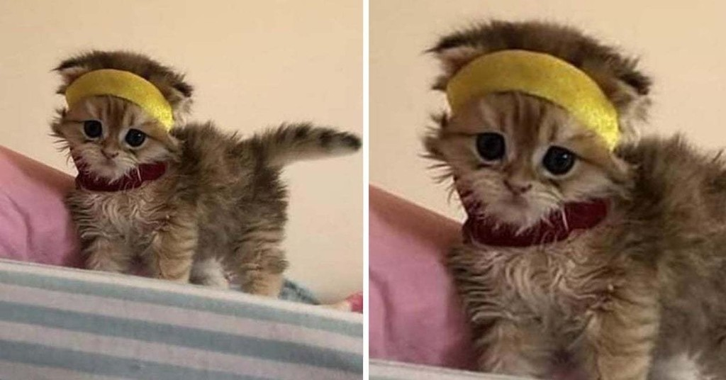 15 Cat Posts That Went Suuuuuuper Viral This Week