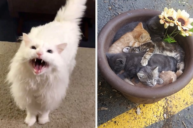 14 Cat Posts To Take Your Week From Blah To Brilliant