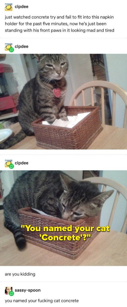 If You Have A Cat Or Have Heard Of Cats, You're Gonna Love These 18 Tumblr Posts