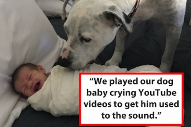 14 Smart, Useful, And Totally Adorable Ways People Got Their Pets Ready For A New Baby