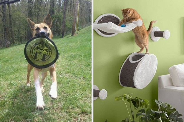 25 Things That'll Help Your Pet Get More Exercise