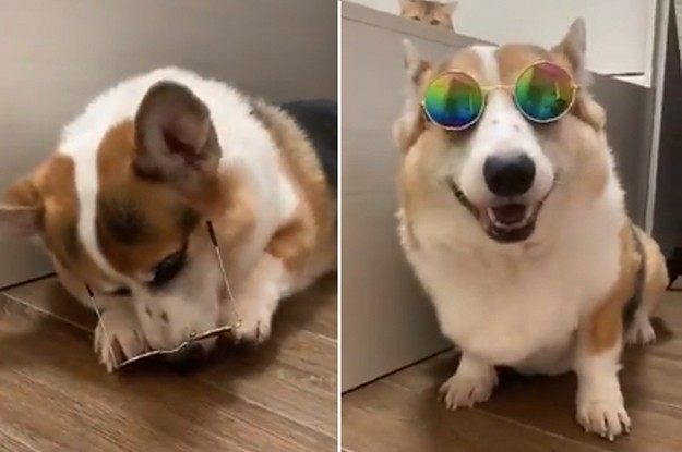 14 Dog Posts From This Week That Serve As Bright, Glowing Beacons Of Hope And Goobness