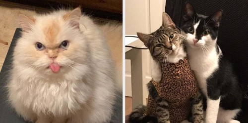 14 Very Good Cat Posts That Might Just Make Your Week A Little Better