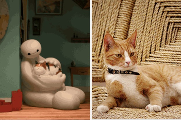 14 Reasons You Should Never, Ever Adopt A Cat