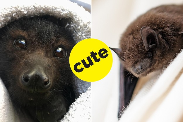 Bats Are Really Just Tiny Sky Puppies And You Shouldn't Be Scared Of Them