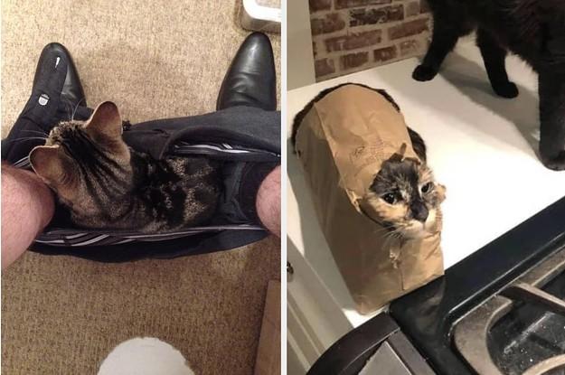 17 Katzen, die eine Entscheidung getroffen haben, und damit basta