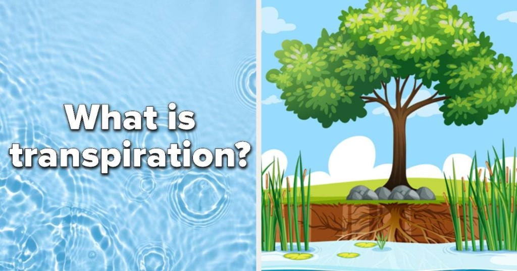 If You Fail This Precipitation Quiz, You Need To Go Back To Grade School
