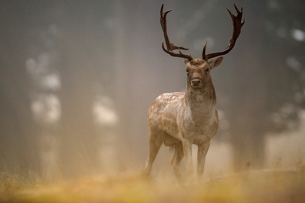 A Hunter Died After The Deer He Shot Got Up And Attacked Him