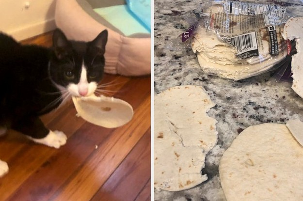 """17 Twitter And Tumblr Posts That'll Make Cat Owners Say """"My God, That's My Life"""""""