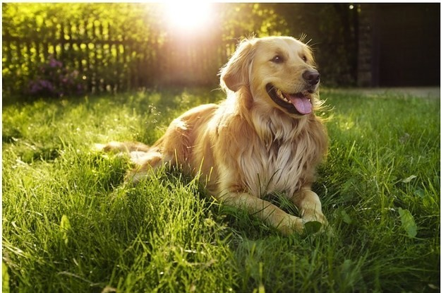 The 20 Easiest Dog Breeds To Train By Their Owner In USA