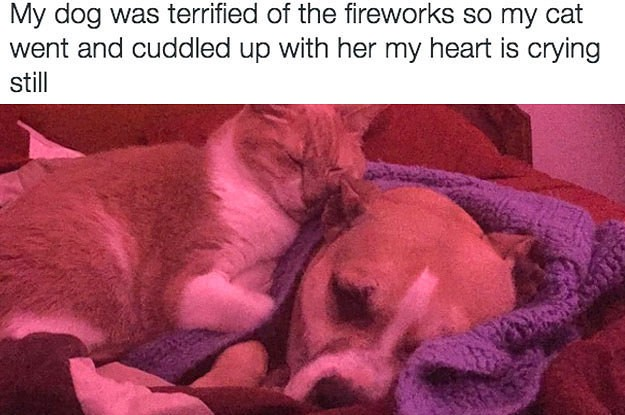 17 Tweets About Pets That Will Make You Inexplicably Happy
