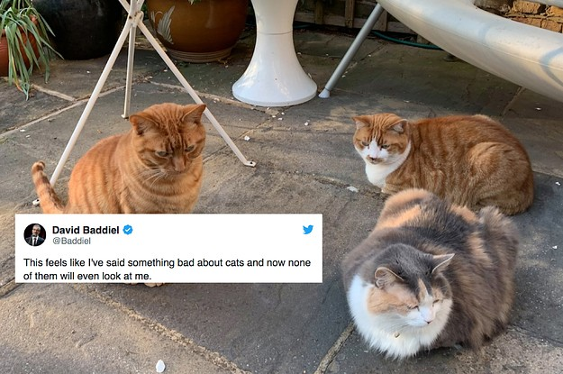 16 Heartwarming And Hilarious Tweets About Animals That Made Me Feel Better This Week