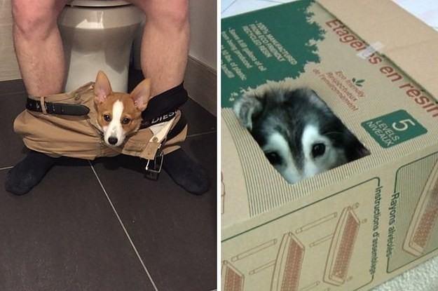 19 Cats Who Think They're Dogs And Dogs Who Think They're Cats
