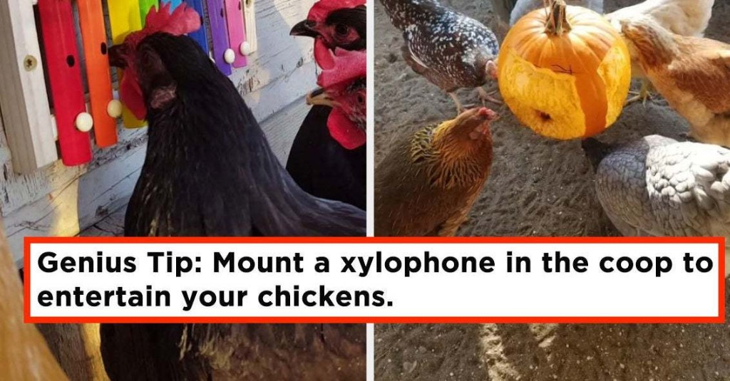 28 Cheap And Clever DIYs For Anyone Who Raises Chickens
