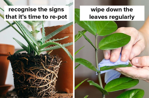 11 Tips For Anyone Who Is Sick And Tired Of Killing All Their Plants