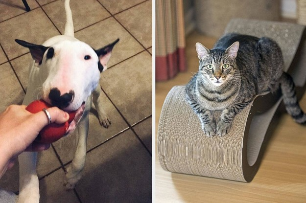 25 Problem-Solving Pet Products Our Readers Actually Swear By
