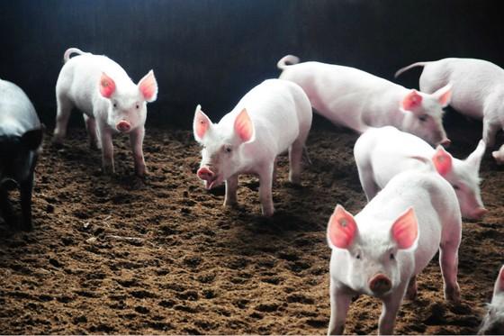 IFC Mulls $80m Loan to Chinese Pig Rearing Firm Guangxi Yangxiang